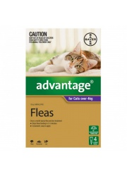 advantage large cat purple 4s 4kg--600x600