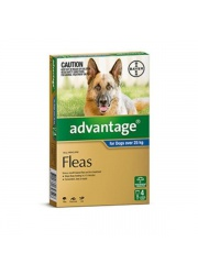 advantageblue4packxlargedogs orig 2